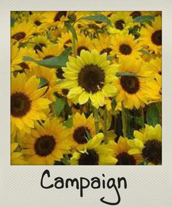 natuのキャンペーン201371